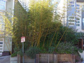 166 Brewster St, San Francisco, CA 94110
