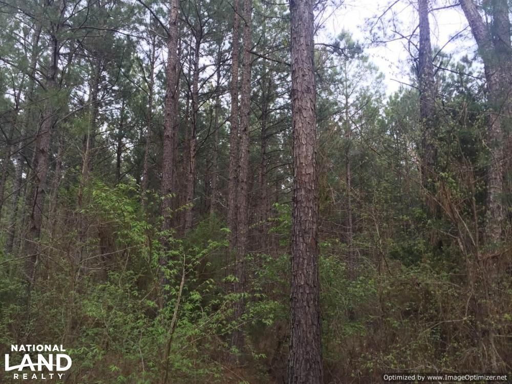 Duck Hill Ms >> Cedar Hill Rd Duck Hill Ms 4 Photos Trulia